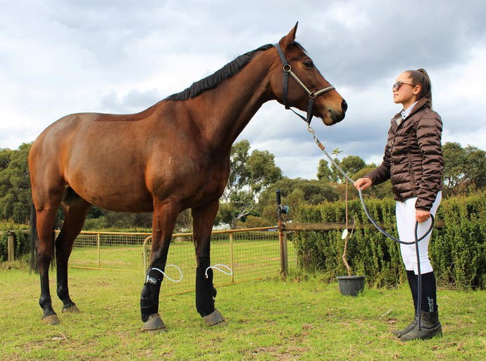 Why you will LOVE our two new equestrian brands…