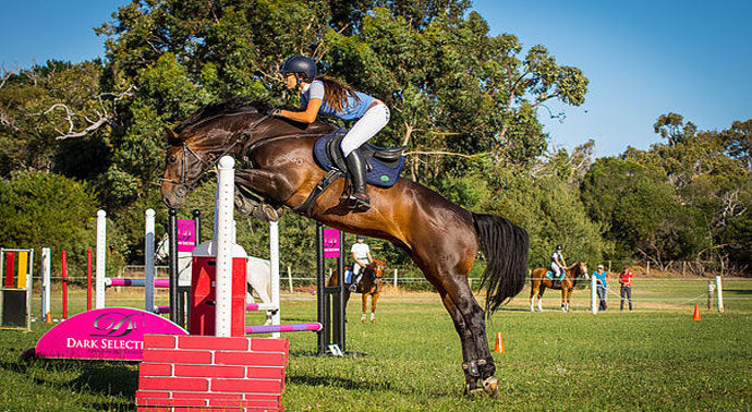 Breeding the Show Jumper: Holsteiner Vs Hanoverian
