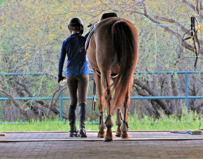 Equestrian Sports: Breaking the 'Elitist' Stigma