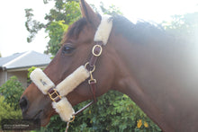 Load image into Gallery viewer, Cavaletti Sheepskin Halter Brown Halters & Flyveils
