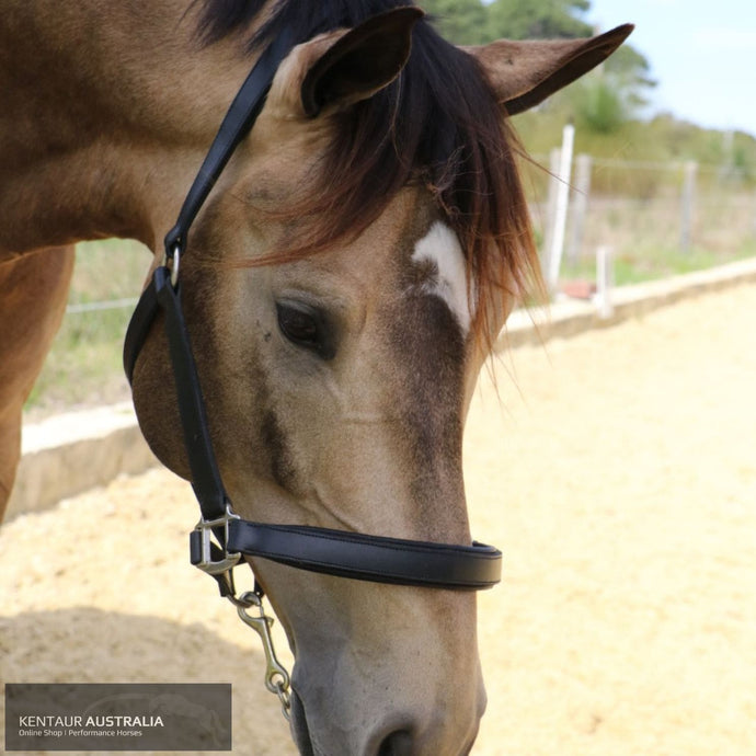 Kentaur Leather Halter Halters & Flyveils