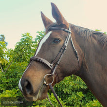 Load image into Gallery viewer, Montar Hunter Bridle Brown / Cob General