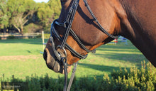 Load image into Gallery viewer, Silver Crown Spider Noseband Bridles