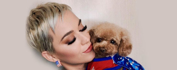 Is Katy Perry Ready To Go Vegan Along With Her Dog