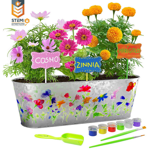 Dan&Darci Paint & Plant Flower Growing Kit - Grow Cosmos, Zinnia, Marigold Flowers : Includes Everything Needed to Paint and Grow - Great Gift for Children STEM