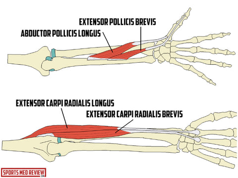 1.tendons associated with De Quervain's, 2. tendons associated with Intersection Syndrome. Credit: The Sports Medicine Review