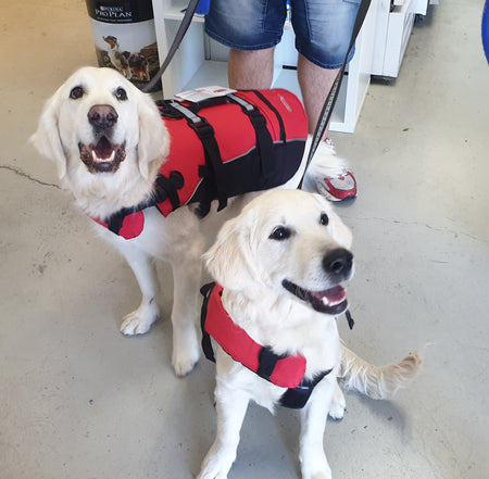 dog products online, dog food, dog toys, dog life jacket and life vest dfd flotation device, cute dogs smiling