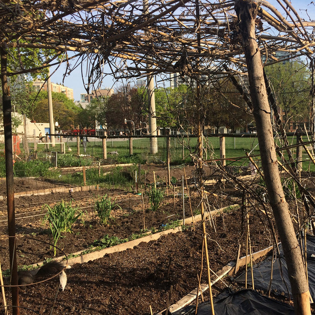 Fred's Community Garden Project