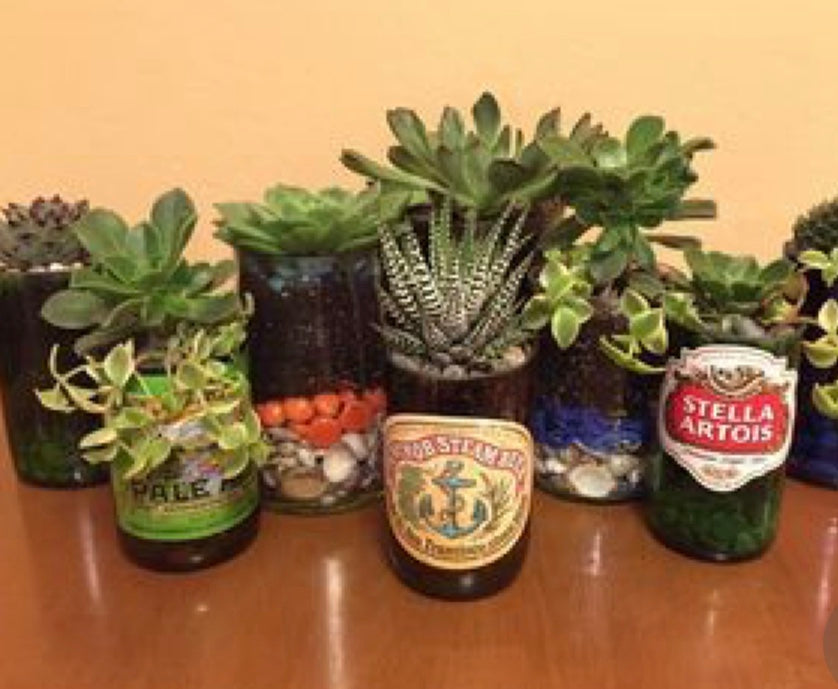 Succulent Beer Can and Bottle Gardens - April 18th, 2019