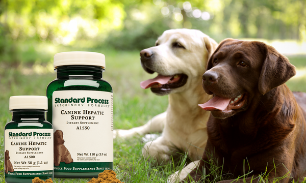 canine hepatic support
