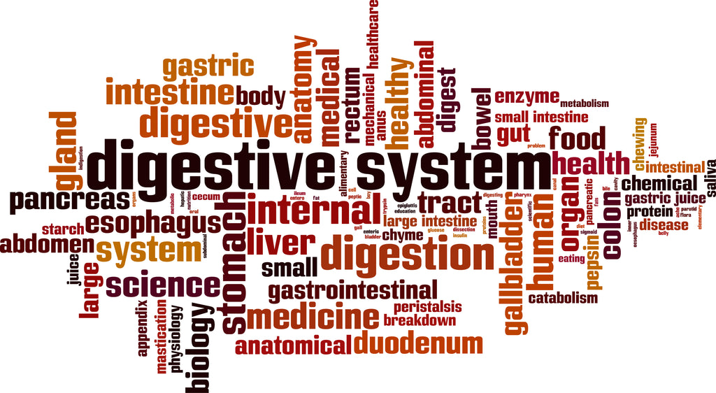 importance of healthy digestion