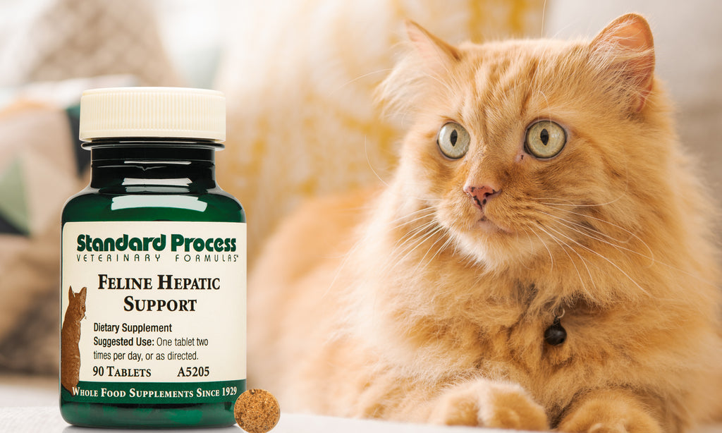 Liver support for your cat