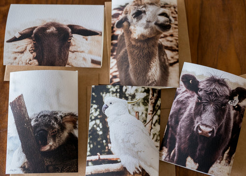 Animal Card Set