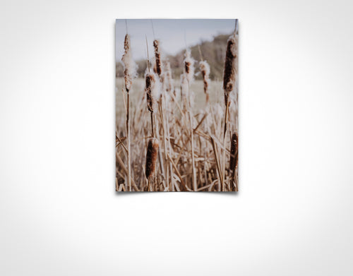 Tall Bulrushes