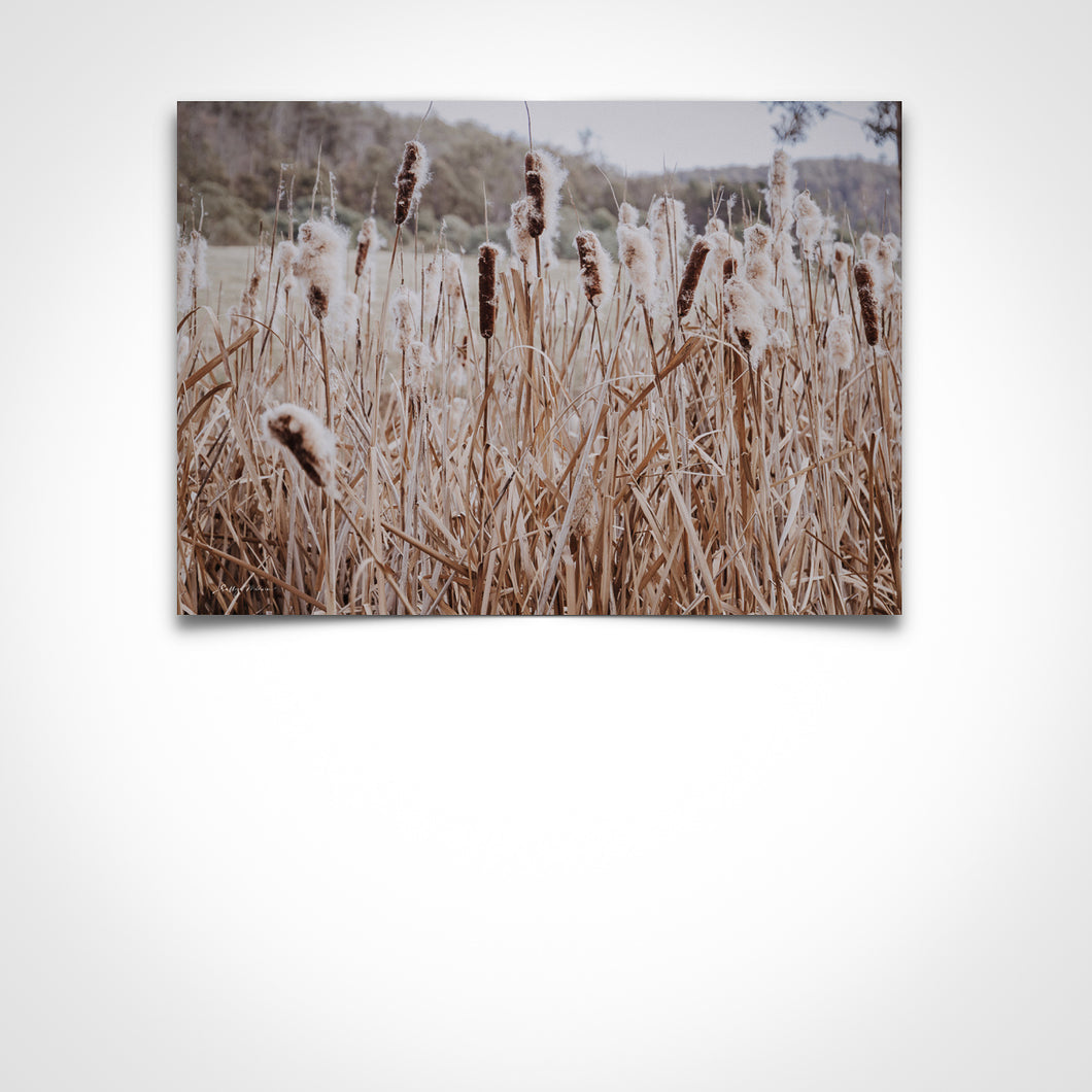 Bulrushes In Landscape