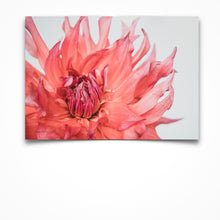 Load image into Gallery viewer, Dahlia Fire