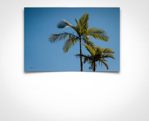 Urban Twin Palm (Bright Blue)