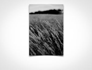 Monochrome Lost Field