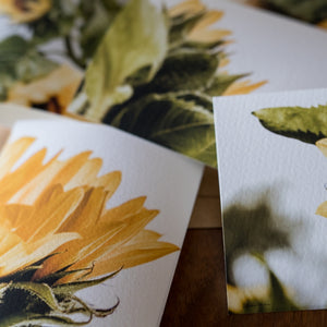 Sunflower Card Set
