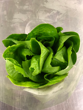 Load image into Gallery viewer, Romaine Head