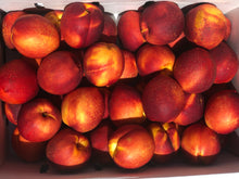 Load image into Gallery viewer, Nectarines Large | 4ct