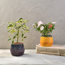 Asher Desk Planter