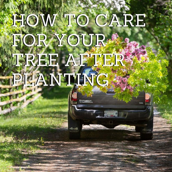 How To Care for Your Tree After Planting