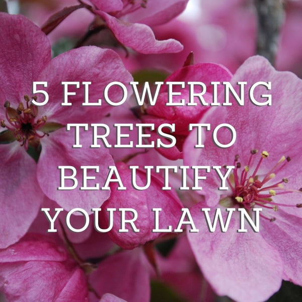 5 Flowering Trees to Beautify Your Lawn