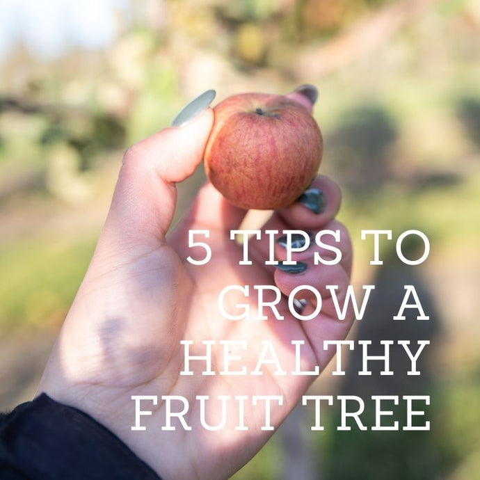 5 Tips to Grow a Healthy Fruit Tree