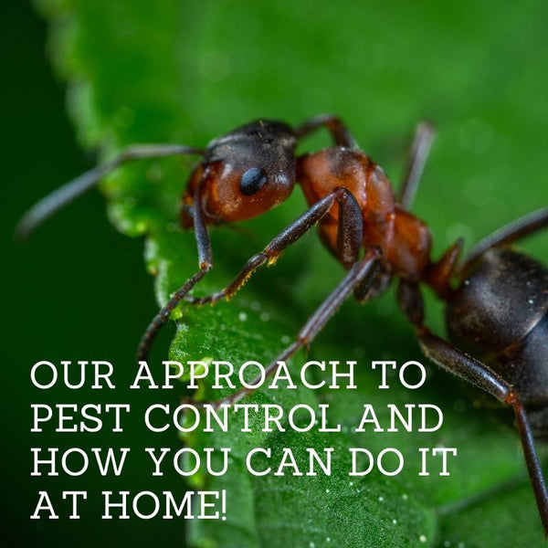 Our Approach to Pest Control and How You Can Do It At Home!