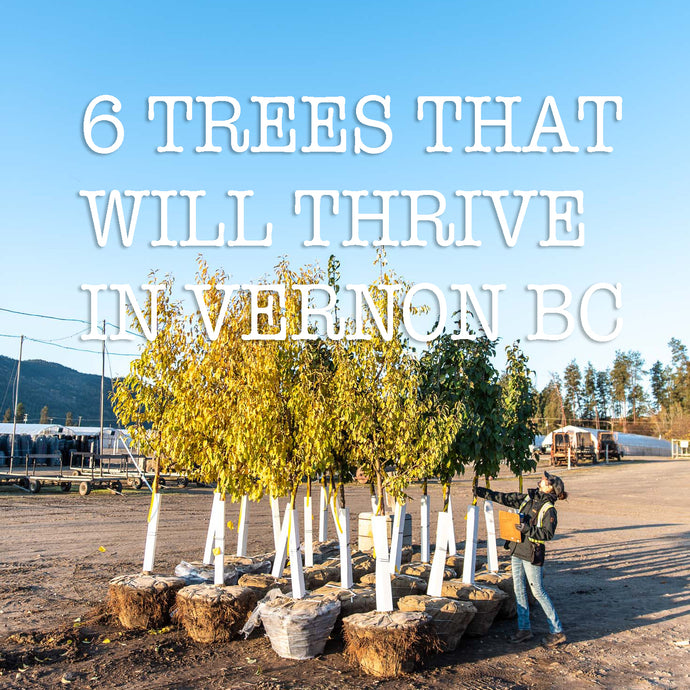 6 TREES THAT WILL THRIVE IN VERNON BC