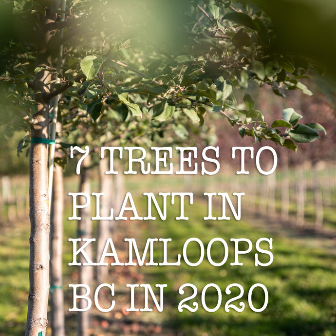 7 TREES TO PLANT IN KAMLOOPS BC IN 2020
