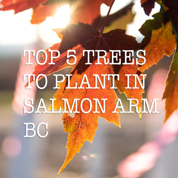TOP 5 TREES TO PLANT IN SALMON ARM BC