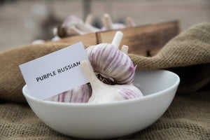 Purple Russian - Purple Springs Nursery