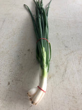 Load image into Gallery viewer, Green onions (bunch)