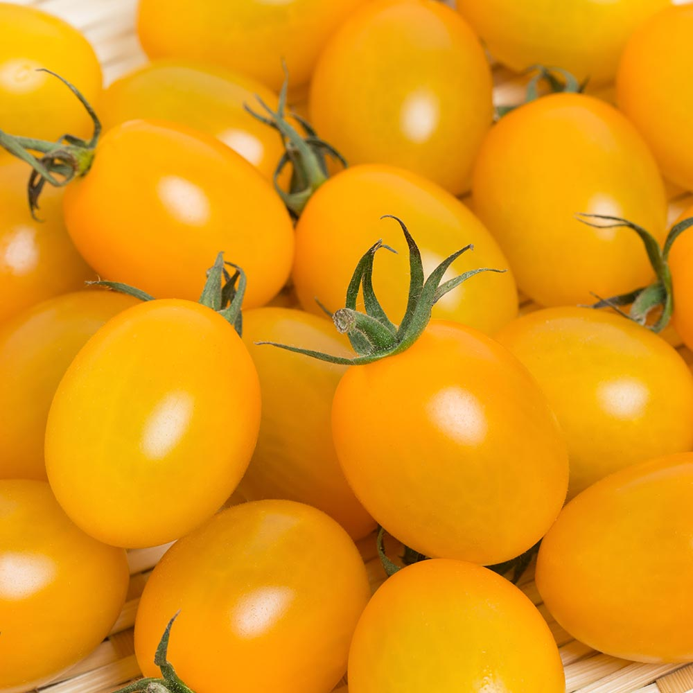 Yellow Grape Tomatoes / per bag