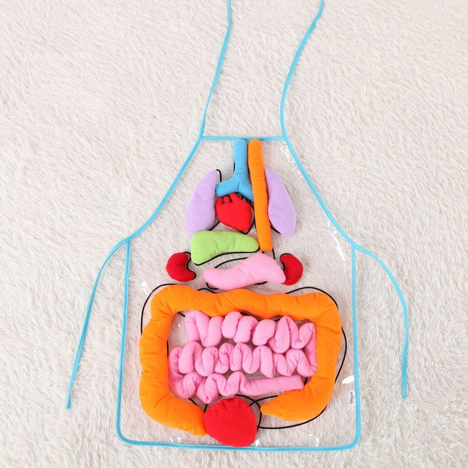 BODY ANATOMY APRON - AN EDUCATIONAL TOY FOR CHILDREN - Clicksstars
