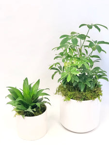 (PRE-ORDER) Father's Day Plant Duo | Designer's choice