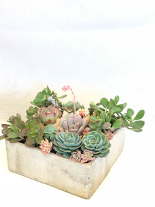 (PRE-ORDER) Father's Day Large Succulent arrangement