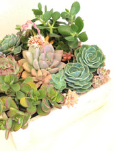 Load image into Gallery viewer, (PRE-ORDER) Father's Day Large Succulent arrangement