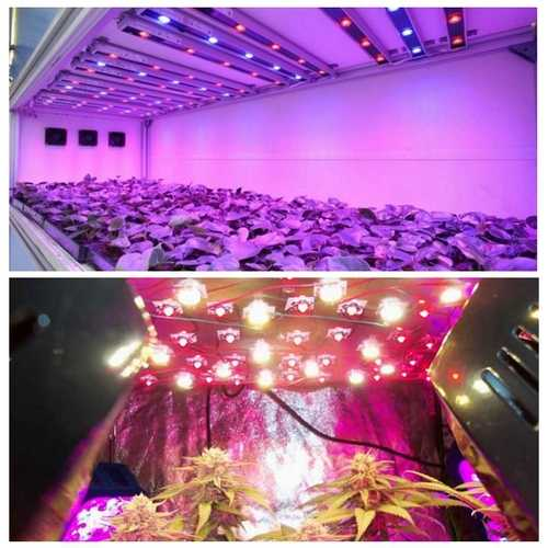 3W 380nm-840nm Full Spectrum LED Plant Grow Light Chip for Garden 3.0-3.4V