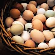Heritage Eggs - Large