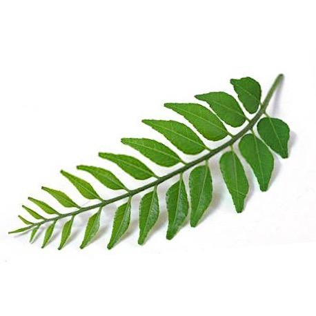 Curry leaf - per bunch