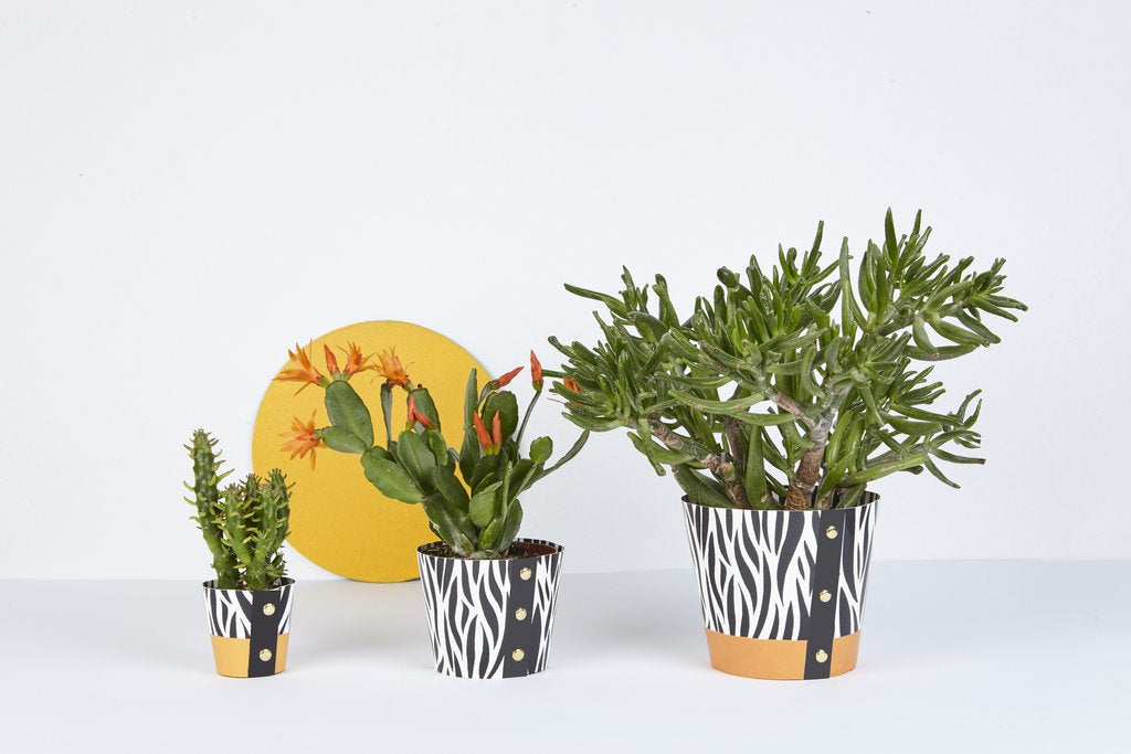 Wald Plant Pot Cover - Zebra — The Tetley Shop