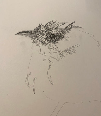 Rendering of frazzled bird by Holly Gardner