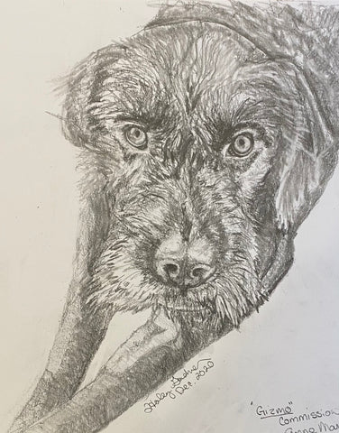 Drawing of Gizmo the dog