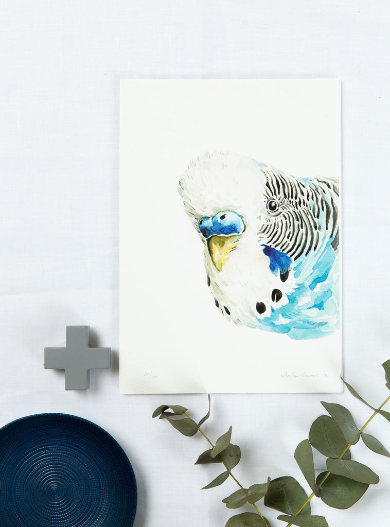 Stefan Gevers - Budgerigar - edition print- SALE