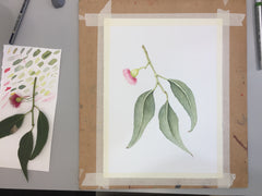 BOTANIC ART WORKSHOP | SUNDAY 18 August  | 10-4pm
