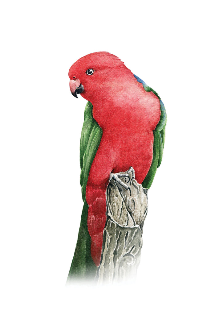 Stefan Gevers - King Parrot - limited edition print