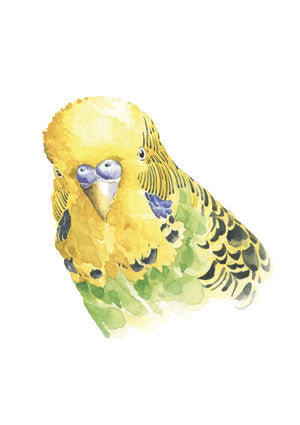 Stefan Gevers - Green budgie - edition print -SALE